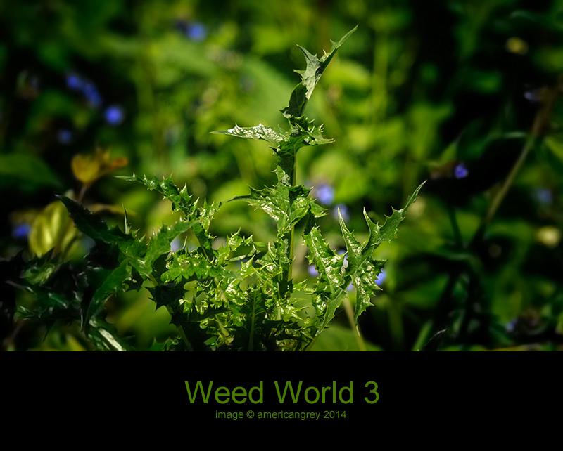 Weed World 3
