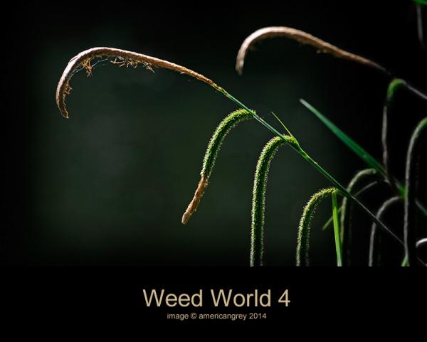 Weed World 4