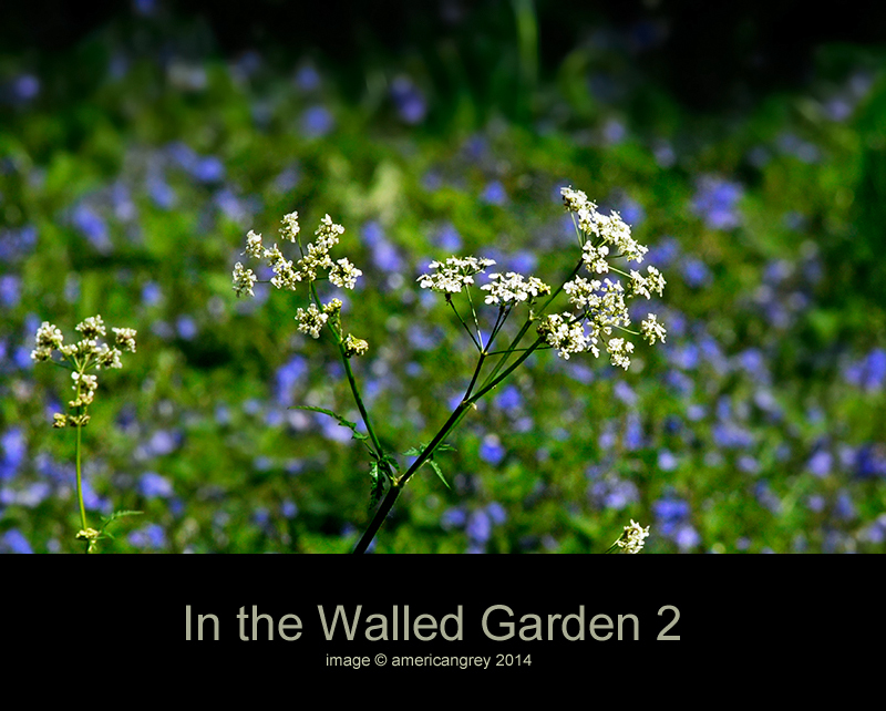 In the Walled Garden 2