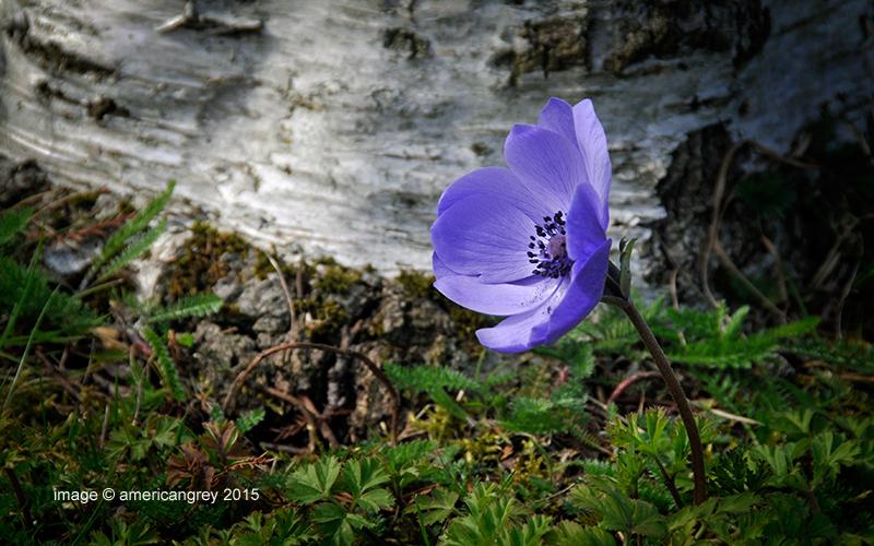 A Flower for Easter