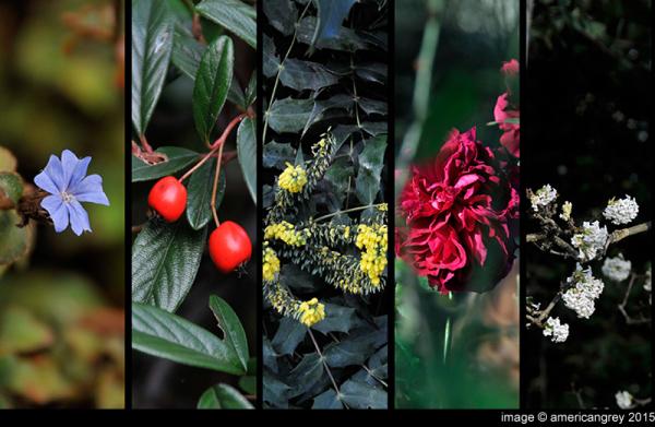 Late-Autumn Colors