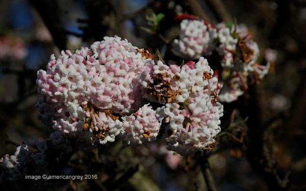 Blossom !