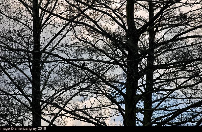 Lone Crow 2/2