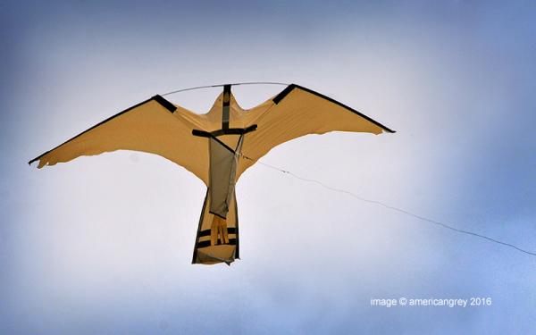 Fly a Kite . .