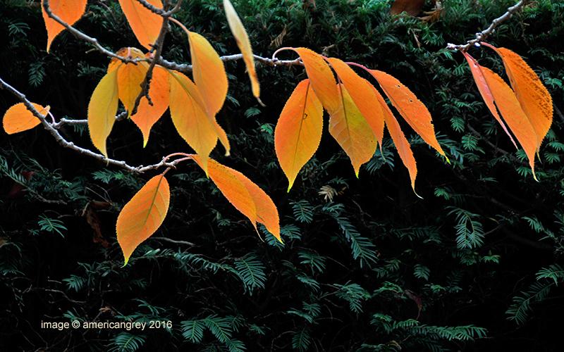 Leaves Afire