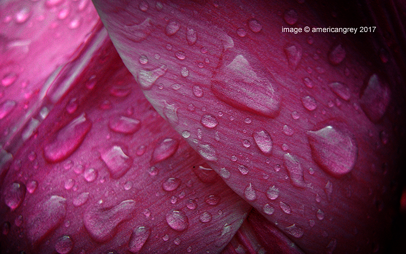 Wet Week 5