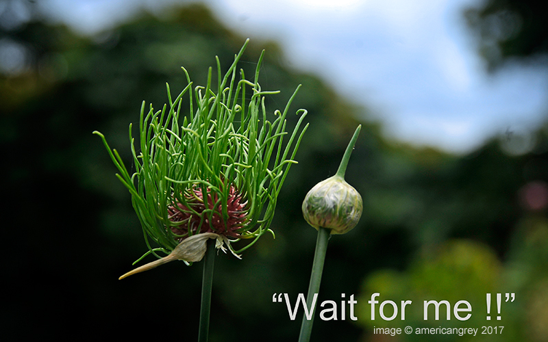"""Wait for me . . """