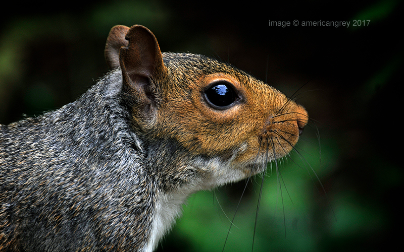 Yet another squirrel . .