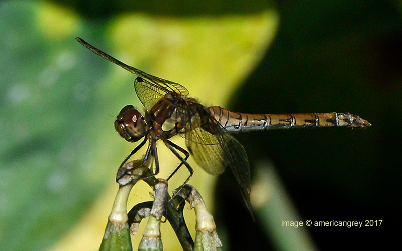 Dragonfly 2/2