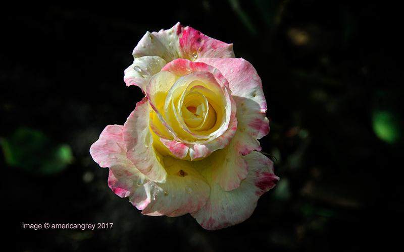 Still in Bloom . .