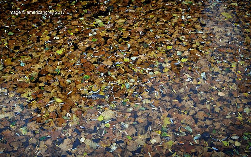Autumn Leaves . .