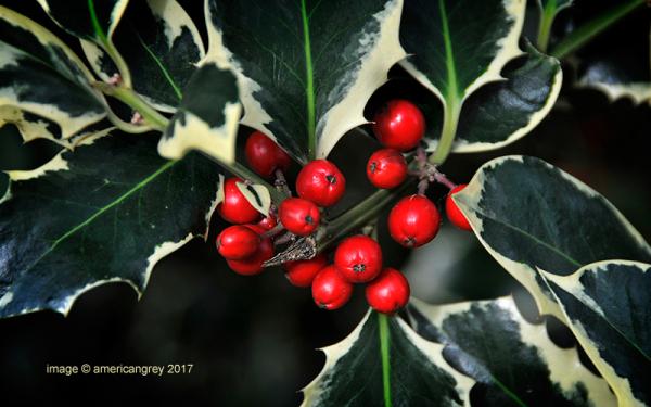Closer to Christmas . .