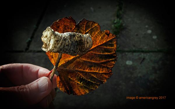 Curled Leaf 3/3