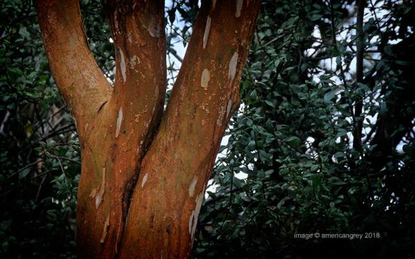Trees 2/3