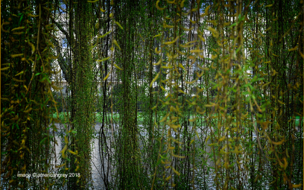 Willow Curtain