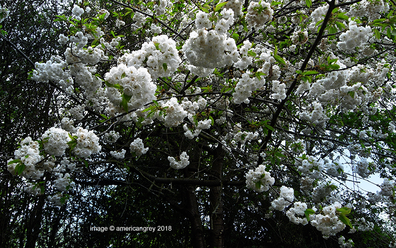 The Weight of Blossom