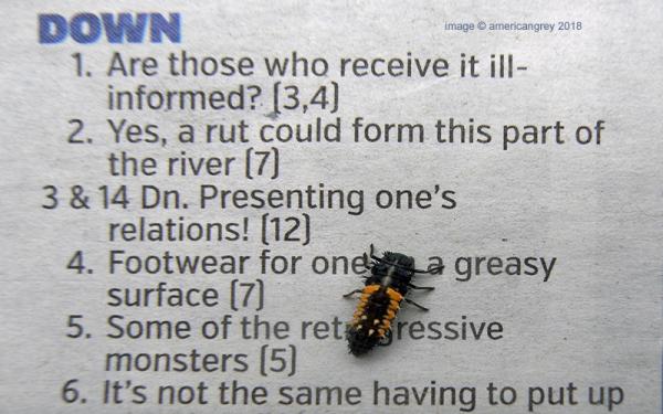 Crossword Bug