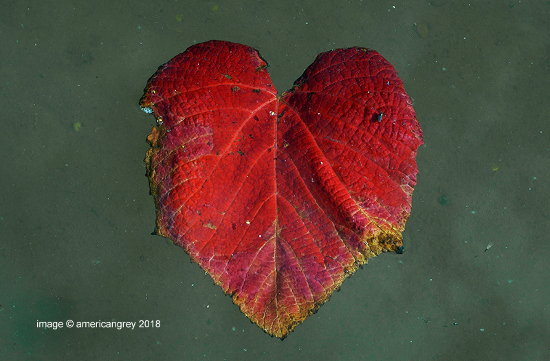 Heart . .