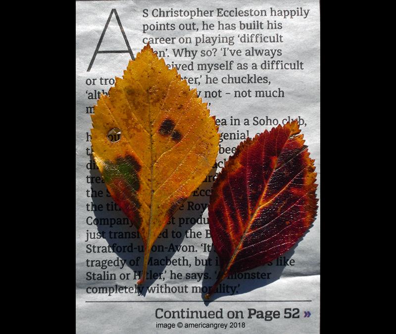 Leaf Study  1/3