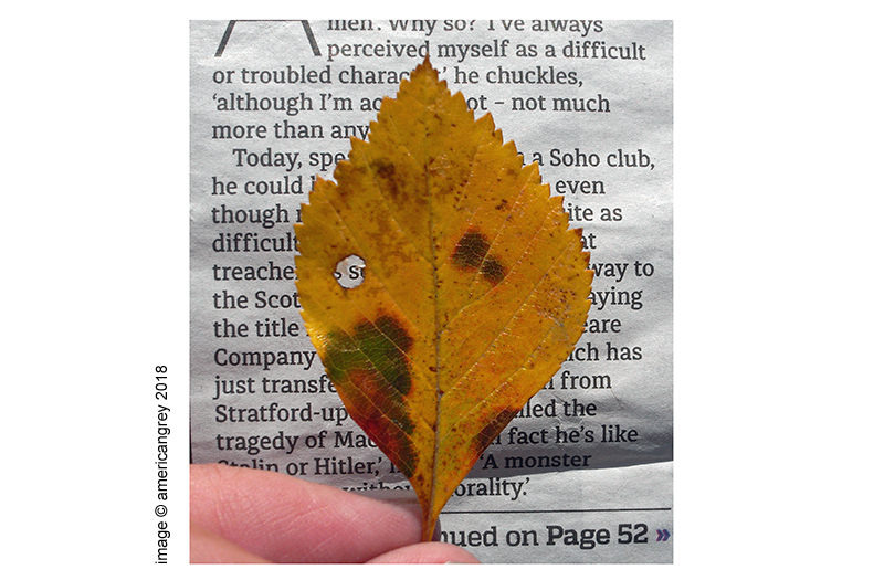 Leaf Study  2/3
