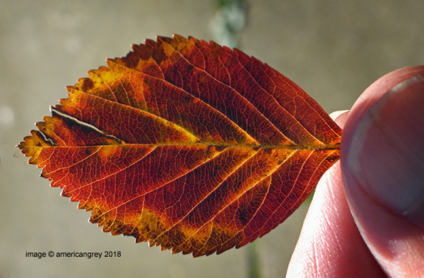 Leaf Study  3/3