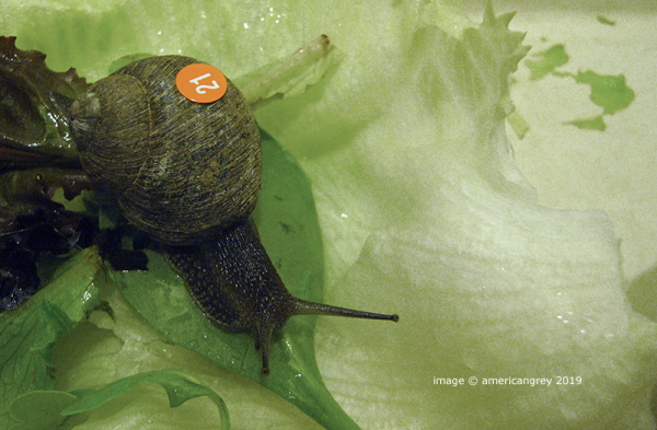 Snail Number 21