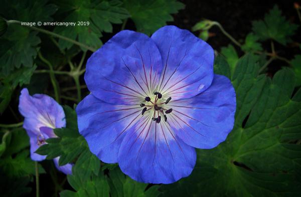 Loving Blue