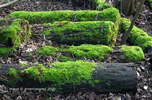 Winter Woodlands 2 of 4