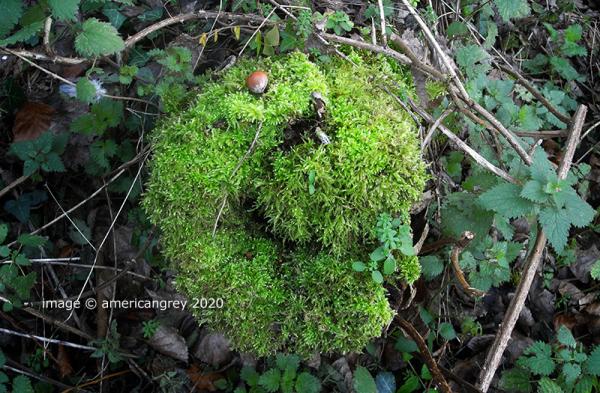 Winter Woodlands 3 of 4