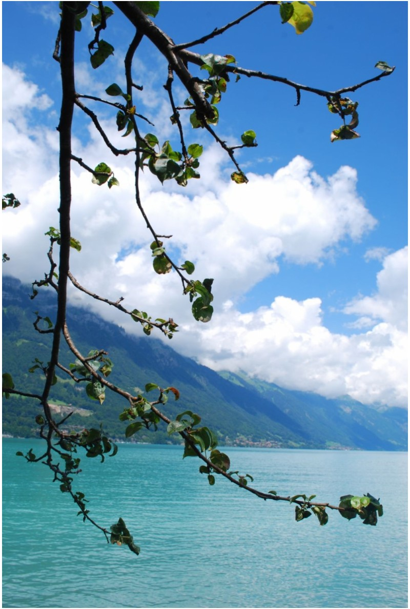 Flowering lake