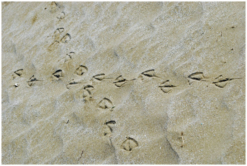 Sandy traces