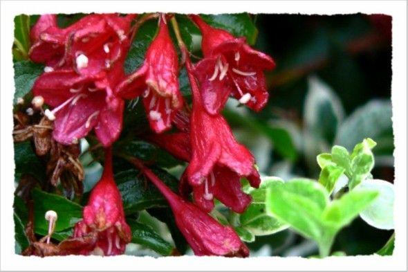 flowers at kew gardens
