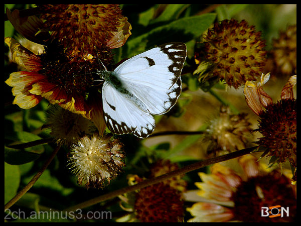 ben photo - butterfly pic