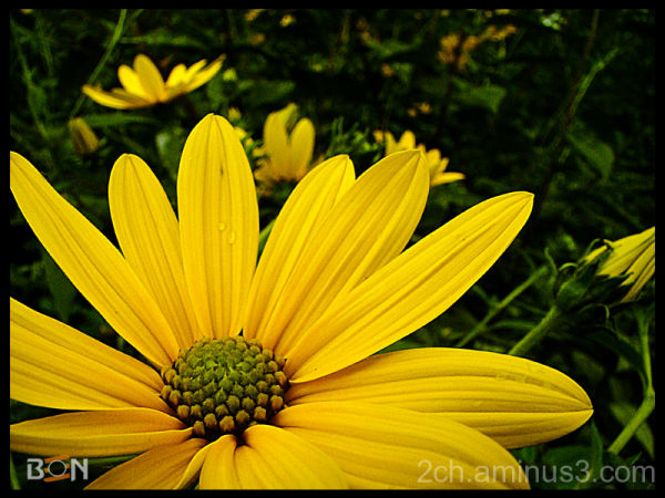 Ben Photo - Flower pic - yellow flower