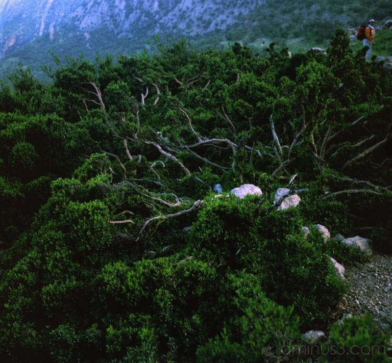 nature of khamin