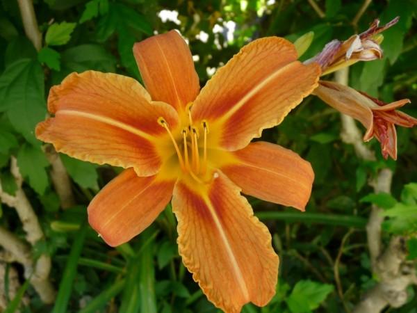 Un été en fleur