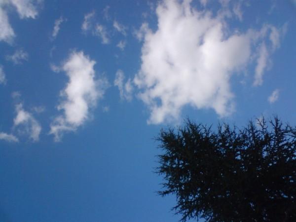 Un Sapin dans le ciel