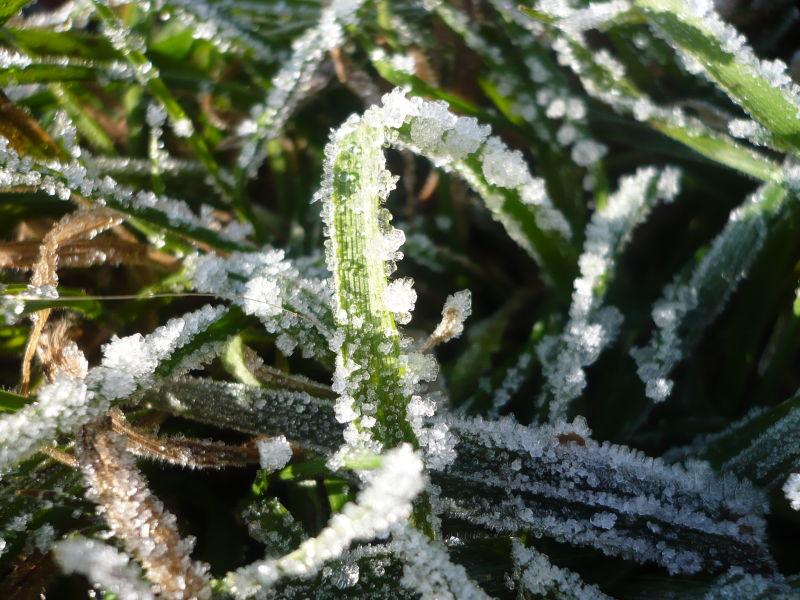 Herbe glacée de l'hiver