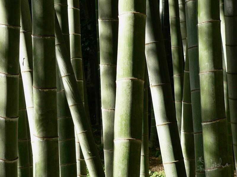 bamboo forest Hokokuji