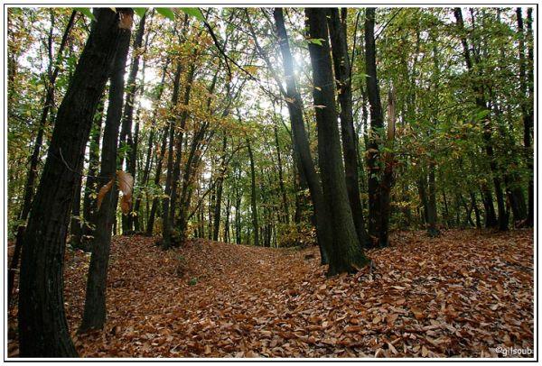Forêt d'automne...
