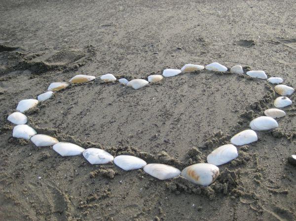 Heart made of shells