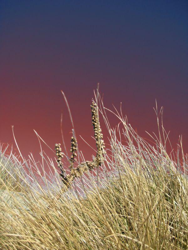 Colour Grass