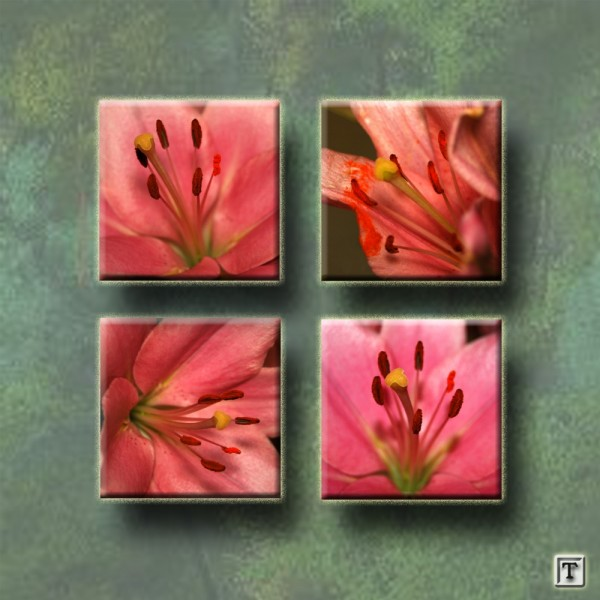 Flowers in four quadrants