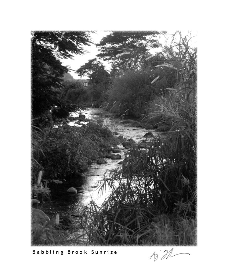 Black and white of a brook