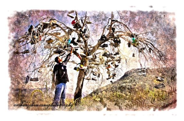 Shoe Tree on AZ HWY 87 South