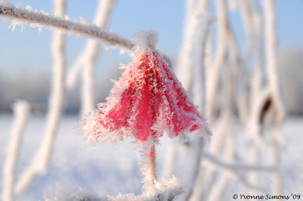 Winter in Holland (5)