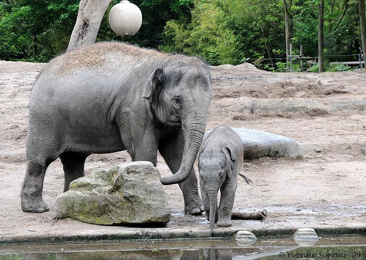 At the zoo (3)