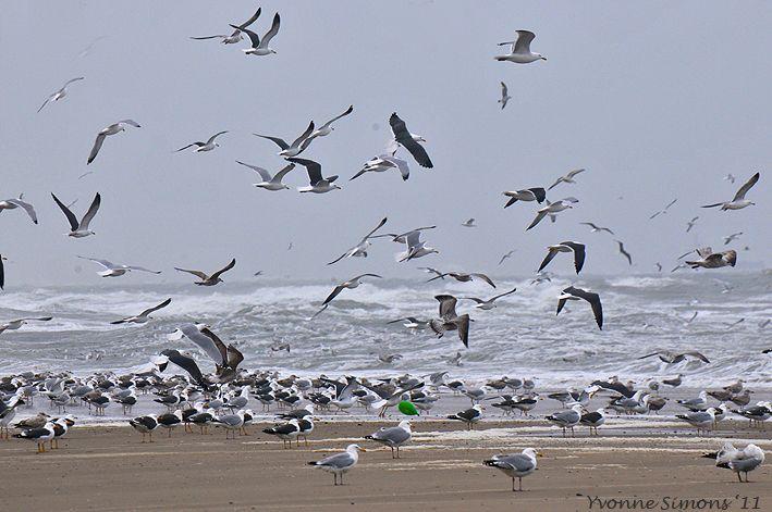 100 gulls and a green balloon