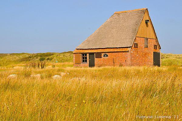 sheep barn 2
