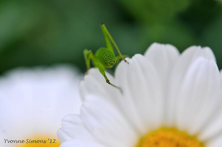 Little alien